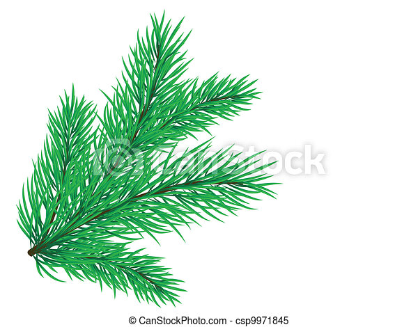 Pine branch  - csp9971845
