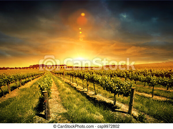 Stunning Vineyard Sunset - csp9972802