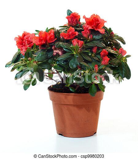 Stock de fotos de planta florecer maceta aislado for Imagenes de plantas en macetas