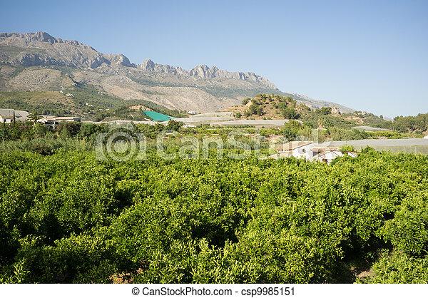 Costa Blanca rural landscape - csp9985151