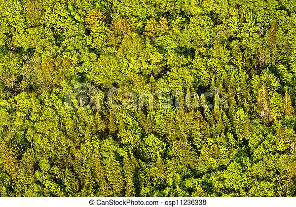 canadá, aéreo, árvores, verde, quebec, vista, floresta - csp11236338