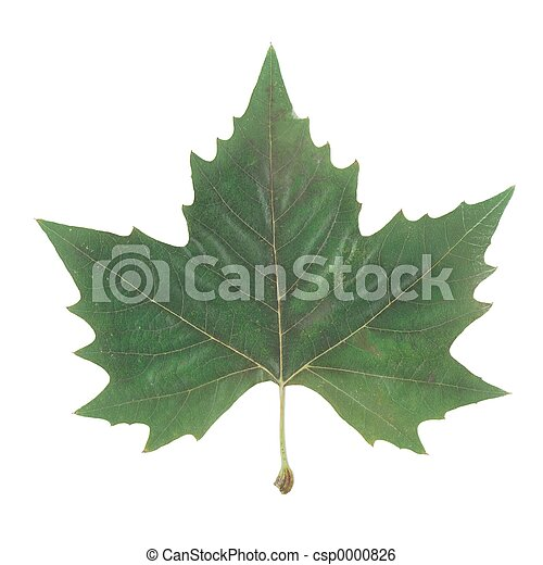 Canada symbol - csp0000826