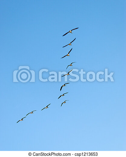 Canadian Geese Wedge  - csp1213653