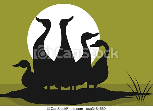 Sauvage illustration canards - Illustration canard ...