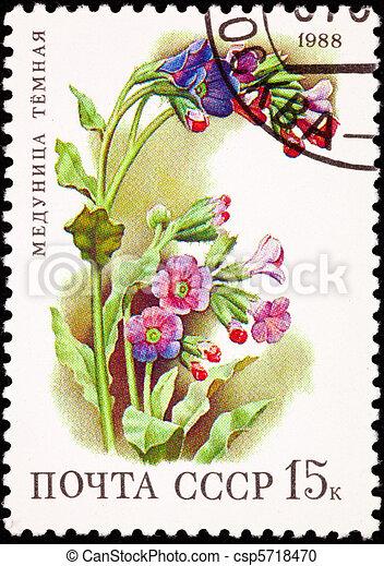 Canceled Soviet Russia Postage Stamp Flower Lungwort Plant Pulmo - csp5718470
