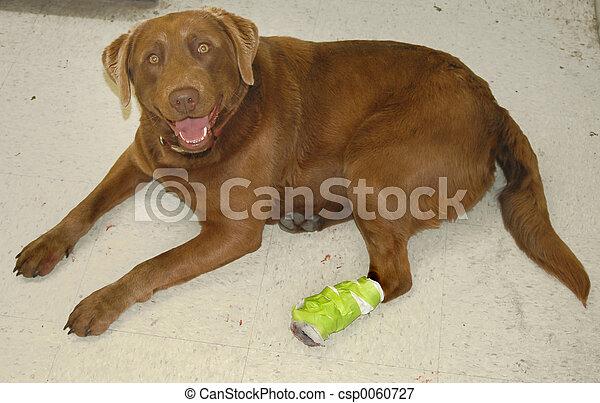 Cane danneggiare bendato cane foot foto cerca foto for Piani casa cane trotto