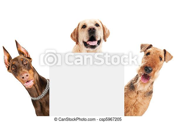 cane, terrier, isolato, airedale - csp5967205