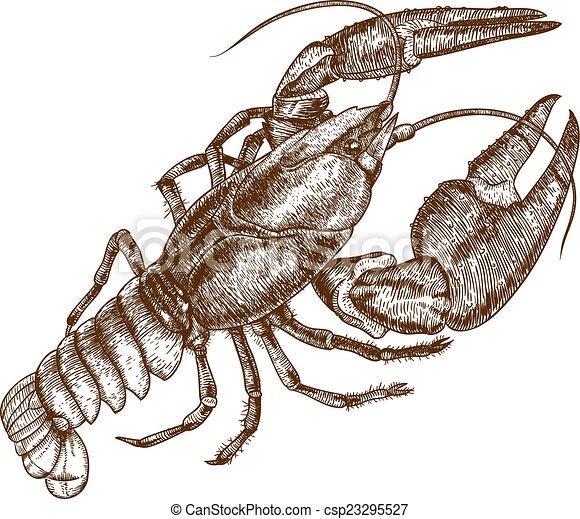 La ilustración de un cangrejo - csp23295527