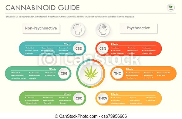 Cannabinoid Guide horizontal business infographic - csp73956666