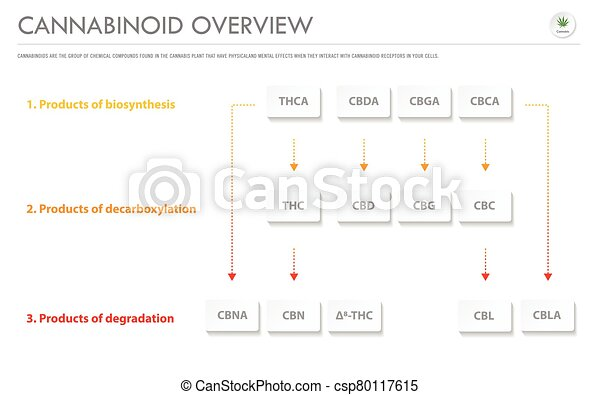 Cannabinoid Overview horizontal business infographic - csp80117615