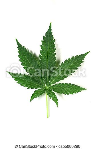 cannabis - csp5080290