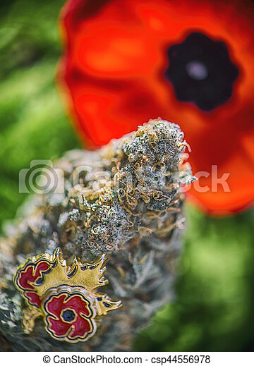Cannabis Bud In Front Of A Poppy Flower Medical Marijuana For