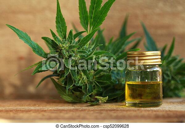 Aceite de cannabis y cáñamo - csp52099628