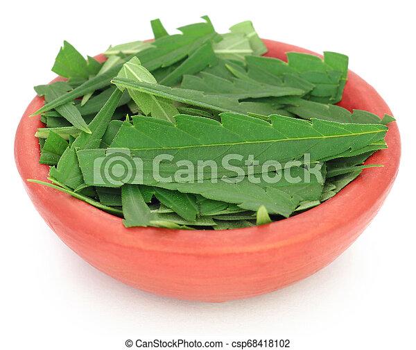 cannabis, folhas - csp68418102