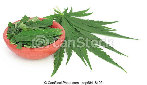 cannabis, folhas - csp68418103