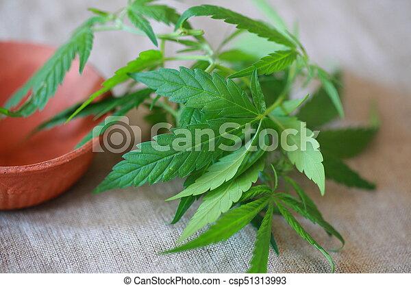 cannabis, folhas, folha, verde, marijuana - csp51313993