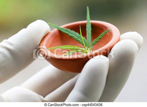 cannabis, folhas, ou, marijuana - csp44543436