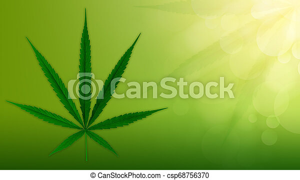 cannabis, fundo, verde, marijuana, leaves. - csp68756370
