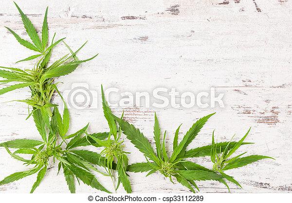 cannabis, kopie, space. - csp33112289