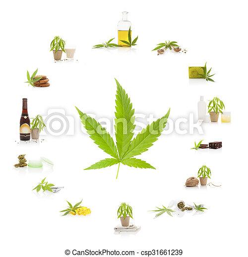 Cannabis. - csp31661239