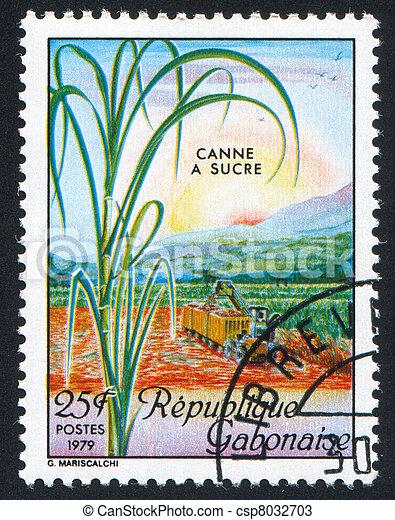 canne, récolte, sucre - csp8032703