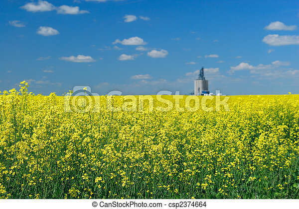Canola Field and Elevator - csp2374664