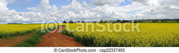 Canola Fields - csp22337493