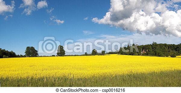 Canola Panoramic - csp0016216