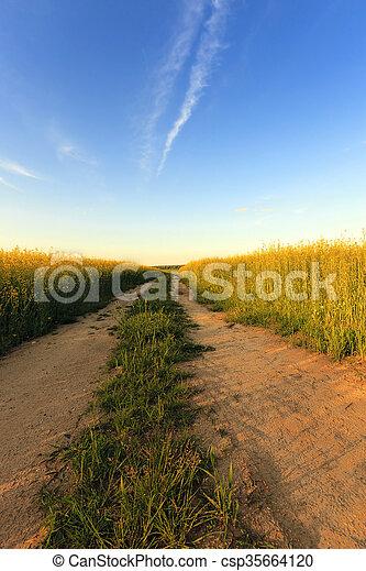 canola, rural, estrada - csp35664120