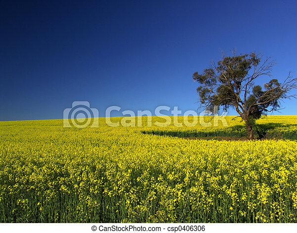 Canola Tree - csp0406306