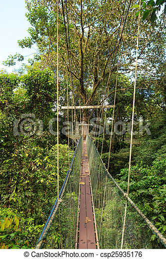 Canopy walk at gunung mulu national park - csp25935176 & Canopy walk at gunung mulu national park borneo malaysia.