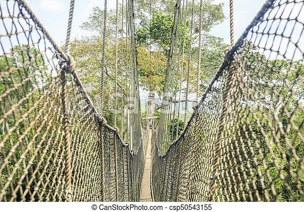 Canopy walkways in tropical rainforest, Kakum National Park, Ghana - csp50543155
