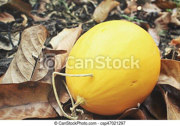 Cantaloupe melon - csp47021297