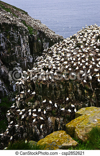 Cape St. Mary\'s Ecological Bird Sanctuary in Newfoundland - csp2852621