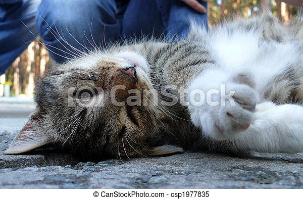 carícia, enjoyd, human, gato - csp1977835
