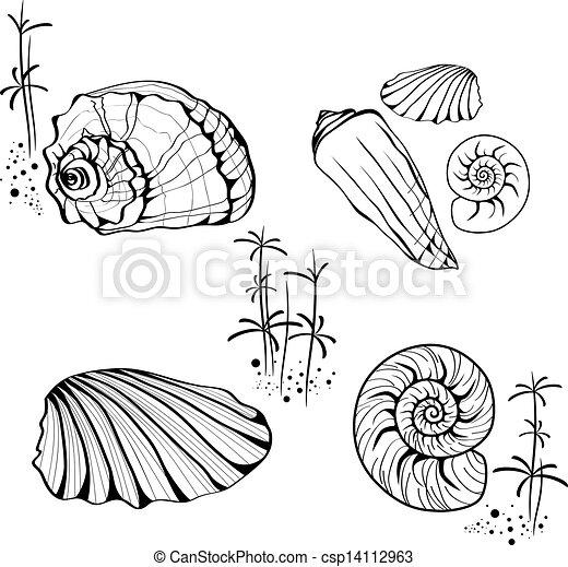 Caracoles, conchas de mar. Cáscara, caracol, encima, colección ...