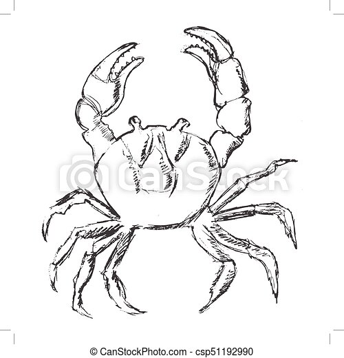 carangueijo, animal, oceânicos - csp51192990