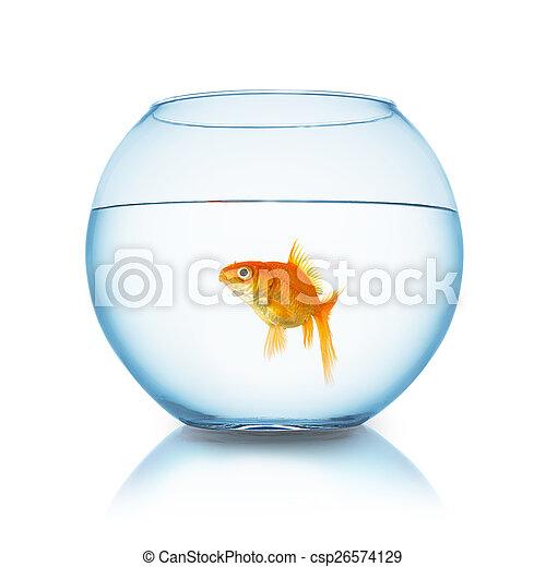 Carassius auratus in a fishbowl - csp26574129