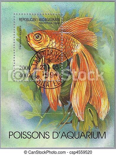Carassius auratus - csp4559520