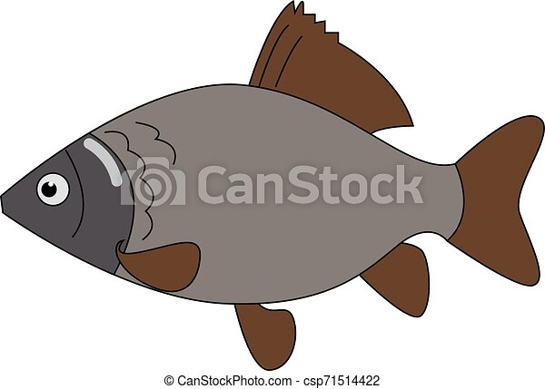 Carassius fish, illustration, vector on white background. - csp71514422