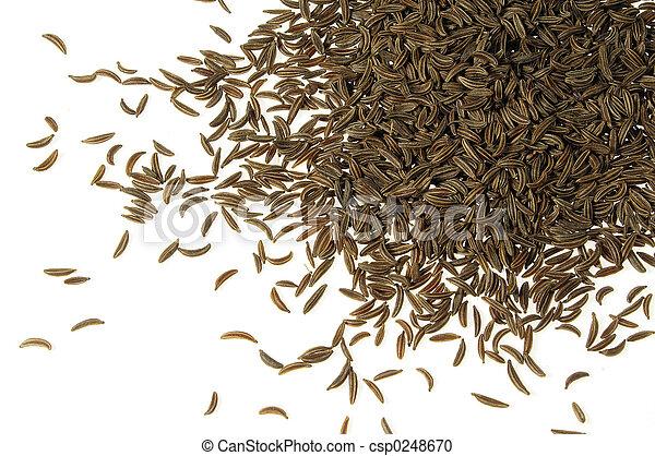 Caraway seed - csp0248670