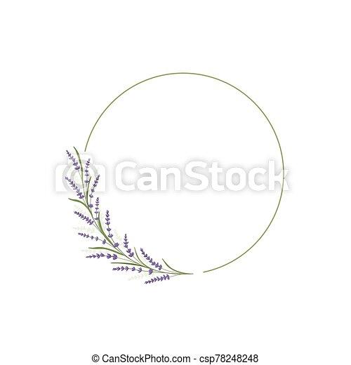 card., vector, lavanda, plano de fondo, hoja, decor., diseño, verde, boda, gráfico, frame., ilustración, floral, invitación, decoración, círculo, flor, template., marco - csp78248248