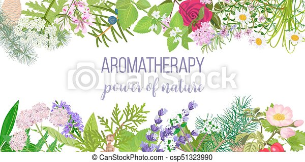 Card with essential oil plants. Frame Ornament with text aromatherapy. Power of nature - csp51323990