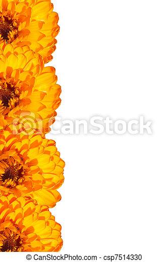 Card with orange flowers - csp7514330