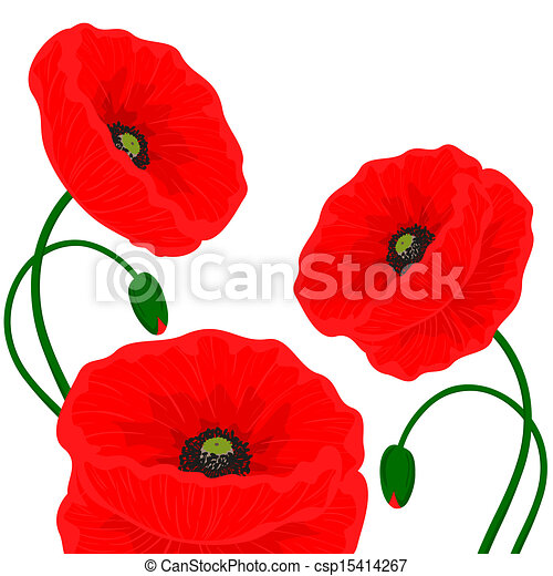 Card with red poppy flowers on a white background card with red poppy flowers csp15414267 mightylinksfo