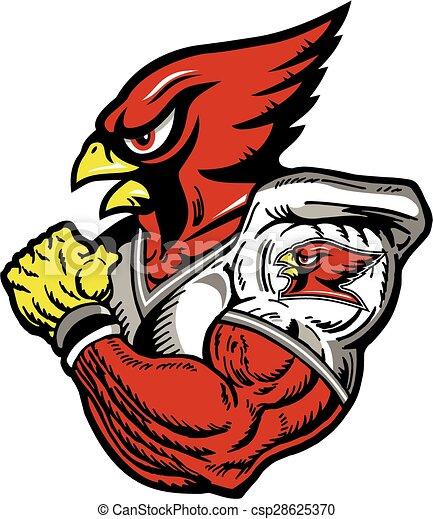 cardinal football player - csp28625370