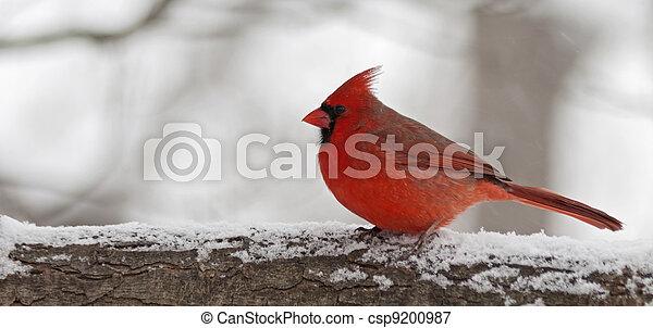 cardinal - csp9200987