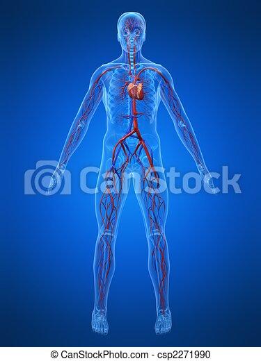 cardiovascular system - csp2271990