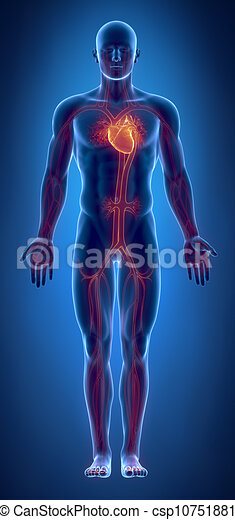 Cardiovascular system with glowing heart - csp10751881