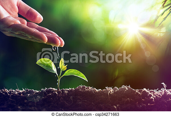 Care Of New Life - Watering Plant - csp34271663